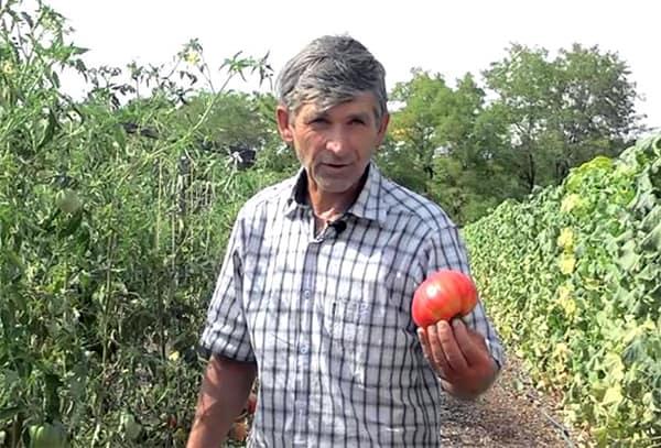Nemes Mátyás az Év biogazdája 2015-ben